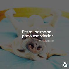 """Perro ladrador, poco mordedor"" #Spanish #LearnSpanish"
