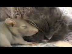 Friendship Knows No Boundaries | Pet Food Direct.com: The Blog