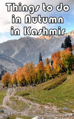 Things to do in Autumn in Kashmir, India. ---> http://www.mappingmegan.com/autumn-in-kashmir/