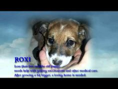 mihaicommercial final - Beautiful dogs in Romania need help! DONATE,ADOPT,SHARE,SHARE!!!