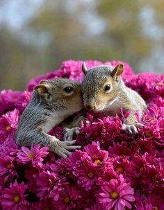 Beautiful squirrel in flower