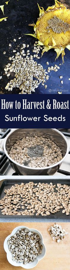 Harvest and Roast (in shell) Sunflower Seeds Growing sunflowers? Here's how to harvest and roast the sunflower seeds from your sunflowers. Here's how to harvest and roast the sunflower seeds from your sunflowers. Sunflower Seed Recipes, Storing Onions, Le Baobab, Palmiers, Winter Soups, Simply Recipes, Strudel, Gardening Tips, Vegetable Gardening