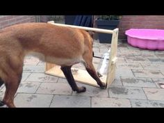 Someone Built The Most Genius Toy for Their Dog. I'm SO Doing This!