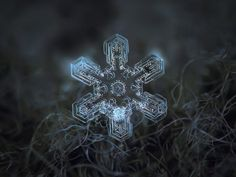 Fotógrafo aficionado captura increíbles imágenes de copos de nieve (Fotos) | Planeta Curioso