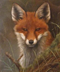 paintings of foxes | Stacy Marks - Exhibitions