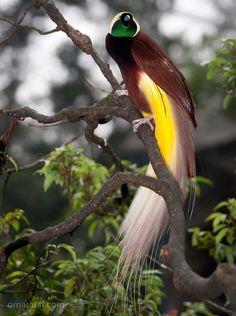 Bird Of Paradise by Omar Ariff on 500px