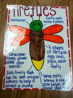 Anchor Chart: Fireflies