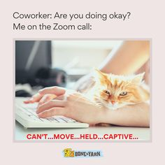 Cats somehow know when you're doing something important! #funnypets