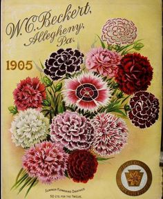 Summer Flowering Dianthus - 50cts for the twelve. Cover from 'Beckert's Garden Flower and Lawn Seed (1905) - W.C. Beckert, Allegheny, Pa.  -  U.S. Department Of Agriculture, National Agricultural Library