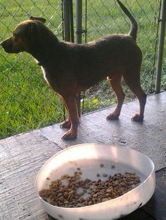 I am a loving mixed breed large dog that came to Angel's named Roscoe. I was rescued from the Jesup pound on June 3 when they were going to euthanize me at the pound. Angel's thinks I am about 2 years old. I am up to date on all my vaccinations and am microchipped too! I am ready for a new home. Are you ready to welcome me into yours? My adoption fee is only $50 and helps Angel's save more lives like mine. Please come rescue me and let me be your furever pet!