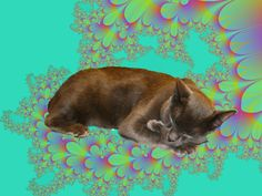 Cat in Fractal