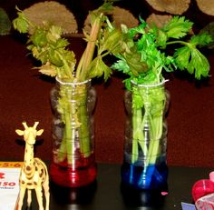 How Plants absorb Water: Celery Science Experiment