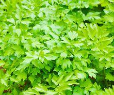 Health 2020, Herbs, Herb, Medicinal Plants