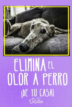 Eliminate the dog smell from your house with this trick - Eliminate the dog smell from your house with this trick Eliminate the dog smell from your house wit - Dog Love, Puppy Love, Dog Smells, Dog Wash, Baby Dogs, Dog Houses, My Animal, Dog Owners, Dog Treats