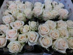 #Rose #Rosa #Myllena: Available at www.barendsen.nl