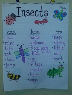 Insects anchor chart
