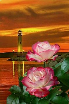 I think this is the prettiest lighthouse picture I've seen yet! Rose Images, Flower Images, Flower Art, Amazing Flowers, Beautiful Roses, Beautiful Images, Good Night Thoughts, Good Night Image, Flower Phone Wallpaper