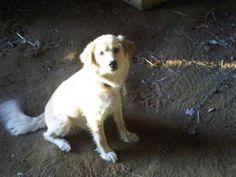 Sugar Bear @ Louie's Legacy Animal Rescue, Cincinnati