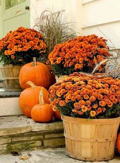 Apple baskets go beautifully with mums! Use a grouping of 3, with pumpkins to help balance basket height - welcoming fall entrance...