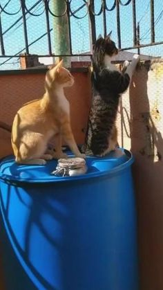 Y sus gatos son chismosos? Gatos, Tattletales