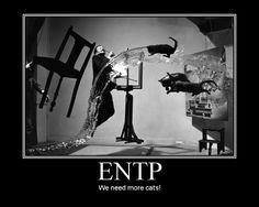 photo entp20cats.jpg