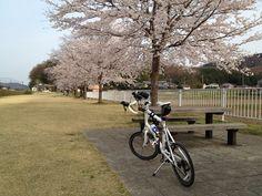 ©fukuchanさま / DASH x20 2013年 / 2013/4/1 茨城県桜川市 iPhone4Sで撮影