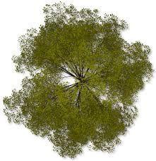 Resultado de imagen de trees archivo png