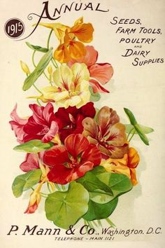 Nasturtiums on P. Mann  Co. seed catalogue cover (1915).