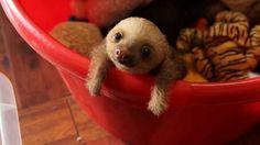15 animales tan pequeños que podrían caber en una mano | Notas | La Bioguía
