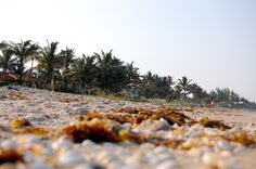 palm beach | photo by Colleen McCaffrey