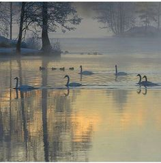 Misty Day, Arctic Circle, Top Destinations, Swan Lake, My Land, Winter Solstice, Flower Art, Natural Beauty, Beautiful Places