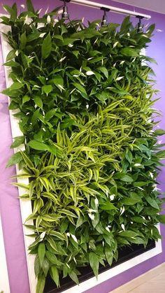 tropical escape vacation homes davenport fl Balcony Garden, Indoor Garden, Outdoor Gardens, House Plants Decor, Plant Decor, Vertikal Garden, Green Wall Decor, Vertical Garden Design, Moss Wall Art