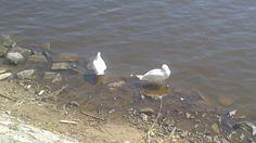 #Ducky