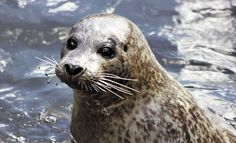 Seals are just dog mermaids .. think about it.