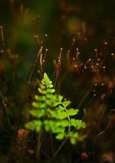 Green and Brown with ferns in bokeh photography Gravel Path, Old Wall, Brown Aesthetic, Garden Structures, World Of Color, Clematis, Horticulture, Green And Brown, Shades Of Green