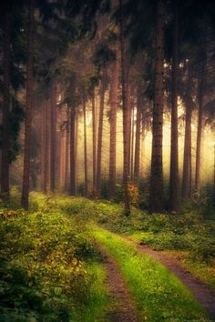 Mystic forest in Vogtland, Saxony, Germany