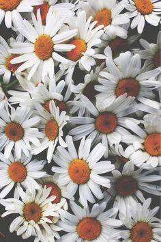 Aren't daisies the friendliest flowers?