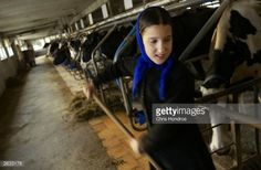 News Photo : Amish girl Linda Stoltzfus rakes up hay in one of...