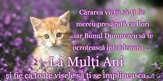 Cute Animals, Martie, My Favorite Things, Learning, Cats, Beauty, Impressionism, Scenery, Pretty Animals