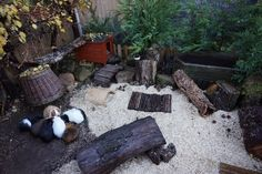 The guinea pigs' outdoor enclosure has been setup for Autumn/Winter time. Examples of enrichment in the area include hutches, cork, wooden bridges, wicker baskets, pine cones and logs. The bedding hemp is very natural looking so works well in an outdoor e