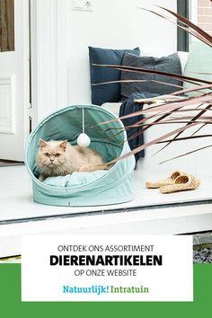Op zoek naar huisdier benodigdheden en voeding? Je vindt alles voor je hond, kat, knaagdier op onze website! Hanging Chair, Throw Pillows, Website, Furniture, Home Decor, Everything, Homemade Home Decor, Cushions, Decorative Pillows