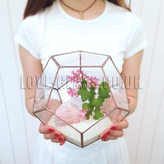 Large Geometric Glass Terrarium / Dodecahedron / Icosahedron Small Geometric Glass Terrarium / Handmade Glass Planter geometric terrarium‬ glass terrarium‬ ‪stained glass‬ ‪stained glass terrarium‬ loveglass‬ ‪‎lenka‬ ‪‎3d  air plant‬ ‪succulent‬ ‪‎‪3d‬ ‪icosahedron ‪cactus‬ ‪terrarium‬ ‪geometric shapes‬ Hexagonal Bifrustum‬ ‪Hexagonal‬ ‎ ModernPlanter‬ ‪Glass Display Boxes‬ Hanging Terrarium‬ ‎Hanging GlassTerrarium‬ Crystals Copper Window Decoration Interior Design