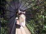 Home of Habitat Haven, Outdoor Cat Enclosures & Catios