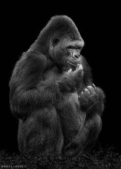 Homepage of Wolf Ademeit, Photographer, Animals Wolf Photography, Insect Photography, Wildlife Photography, Gorilla Wallpaper, Slow Loris, Silverback Gorilla, Animals Black And White, Baboon, Primates