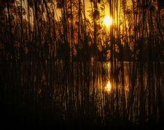 Veiled sunrise... Blink Photography, Veil, Sunrise, Curtains, Home Decor, Blinds, Decoration Home, Room Decor, Veils