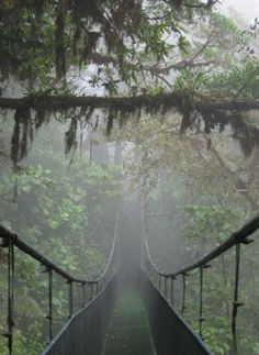 A bridge above and into the clouds - , Puntarenas  Costa Rica