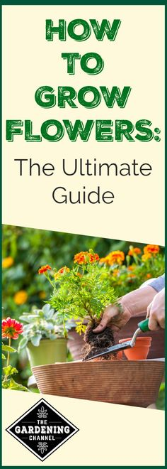 flower gardening tips to learn which flowers will grow best in your climate and how to care for your flower garden. Diy Garden Projects, Garden Tools, Box Garden, Garden Gazebo, Garden Pond, Container Gardening, Flower Gardening, Flower Garden Design, Organic Gardening Tips