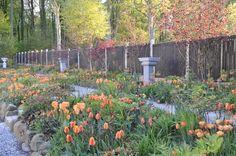 From Claus Dalbys garden in Risskov, Denmark. Visit his blog - www.clausdalby.dk