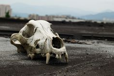 Pekeliling Heights: Dog Skull by Steven Wong (ATKR), via Flickr