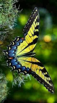 Swallowtail Butterfly beautiful colors and patterns on wings Papillon Butterfly, Butterfly Kisses, Butterfly Flowers, Butterfly Wings, Monarch Butterfly, Butterfly Mosaic, Flying Flowers, Butterfly Mobile, Paper Butterflies